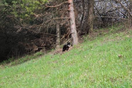 """Pavasarinis foto pasivaikščiojimas po Šilainius, Asociacija ,,Šilainių baltai"""", 2016"""